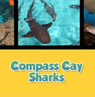 Twice as Good - Compass Cay Sharks