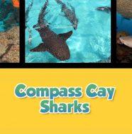 Twice as Good - Compass Cay Sharks