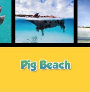 Twice as Good - Pig Beach