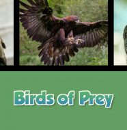 A Taste of Scotland: Beyond the Kitchen - Birds of Prey