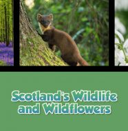 A Taste of Scotland: Beyond the Kitchen - Scotland's Wildlife and Wildflowers